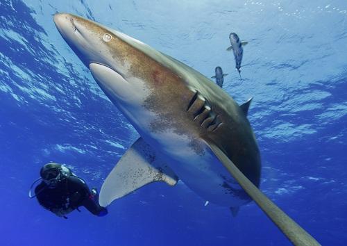 Plonger avec les baleines à la Réunion